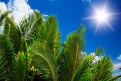 Zielony palmowy bujny na niebieskiego nieba tle. zdjęcia stock