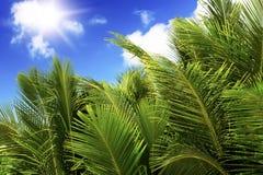 Zielony palmowy bujny na niebieskiego nieba tle. obrazy stock