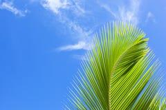 Zielony palmowy frond Zdjęcia Royalty Free