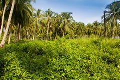 Zielony Palmowy las w Kolumbijskiej wyspie Mucura Fotografia Royalty Free