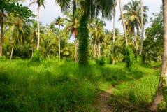 Zielony Palmowy las w Kolumbijskiej wyspie Mucura Obraz Royalty Free