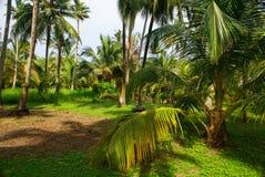 Zielony Palmowy las w Kolumbijskiej wyspie Mucura Obrazy Stock