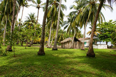 Zielony Palmowy las w Kolumbijskiej wyspie Mucura Zdjęcie Royalty Free