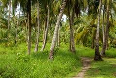 Zielony Palmowy las w Kolumbijskiej wyspie Mucura Zdjęcie Stock