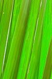 Zielony palmowy liść Obrazy Royalty Free
