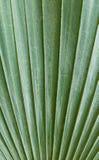 Zielony palmowego liścia tło Obrazy Royalty Free