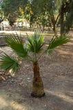 zielony palmowy mały obrazy royalty free