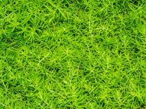 Zielony paproci tło, tekstura i fotografia royalty free
