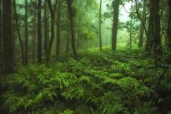 Zielony Paprociowy las Obrazy Stock
