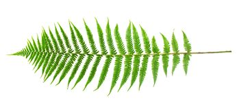 Zielony paprociowy liść Zdjęcia Royalty Free