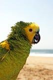 zielony papuzi żółty Obrazy Stock