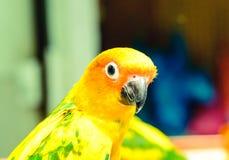 zielony papuzi kolor żółty Obraz Stock