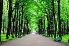 zielony park fotografia royalty free