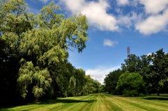 Zielony park obrazy royalty free