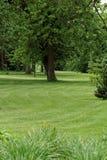 Zielony park obraz stock