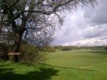 Zielony park Zdjęcia Stock