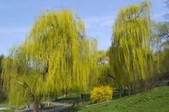 Zielony park w obszarze zamieszkałym Zdjęcia Royalty Free