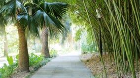 Zielony park z drogą, ścieżką bambusowi drzewa aleje i drzewkami palmowymi, Piękno natury krajobraz Fotografia Stock