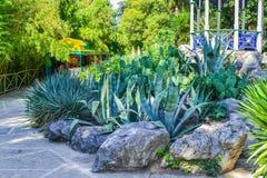 Zielony park z drogą, ścieżka bambusowa drzewo aleja Ładny i wygodny wielki ogród Piękno natury krajobraz Zdjęcie Stock