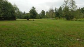 Zielony parka pole Zdjęcia Royalty Free