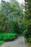 Zielony parkowy drzewny plenerowy Obraz Royalty Free