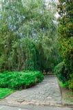 Zielony parkowy drzewny plenerowy Obrazy Stock