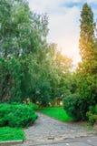 Zielony parkowy drzewny plenerowy Zdjęcie Stock