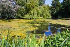 Zielony Parkowy Jezioro Fotografia Stock