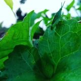 Zielony pasikonik zdjęcie royalty free
