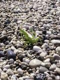 Zielony pasikonik na plaży Fotografia Stock
