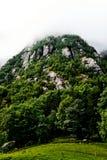 Zielony pasmo górskie w Norwegia zakrywał z mgłą, mgłą i chmurami, przy szczytami z drzewami, trawą i paśnikiem w przedpolu, Obraz Stock
