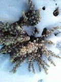Zielony piękno na śniegu zdjęcia royalty free