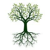 Zielony piękny drzewo z liśćmi również zwrócić corel ilustracji wektora ilustracji