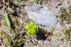 Zielony piękny kwiat i suchy liść Zdjęcia Stock