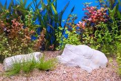 Zielony piękny uprawiany tropikalny słodkowodny akwarium Zdjęcia Royalty Free
