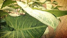 Zielony piękno Fotografia Stock