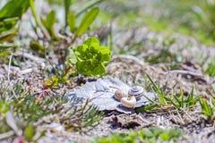 Zielony piękny kwiat i seashells Obrazy Stock