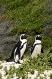 zielony pingwin Zdjęcie Royalty Free