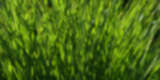 Zielony plamy tło Zdjęcie Stock