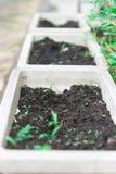Zielony plan na biel garnkach w makro- widoku i Zdjęcie Stock