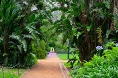 Zielony plantacja park obraz royalty free