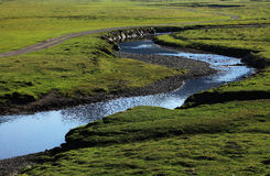 zielony plateau obrazy royalty free