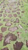 Zielony podłogowy nicefloor przy phimai Fotografia Royalty Free