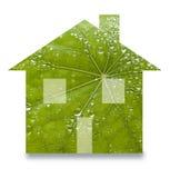 Zielony Podtrzymywalny Domowy liść obrazy royalty free