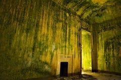 zielony pokój Obraz Stock