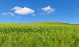 Zielony pola i niebieskiego nieba dzień Obraz Stock