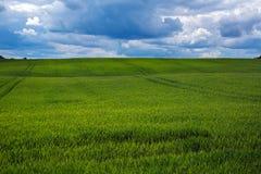 Zielony pola i zmroku niebo Fotografia Stock