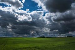 Zielony pola i zmroku niebo Obraz Stock