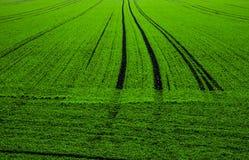 Zielony pole fotografia royalty free