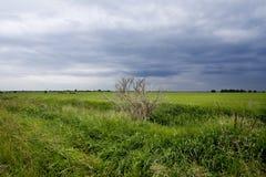 Zielony pole Zdjęcia Stock